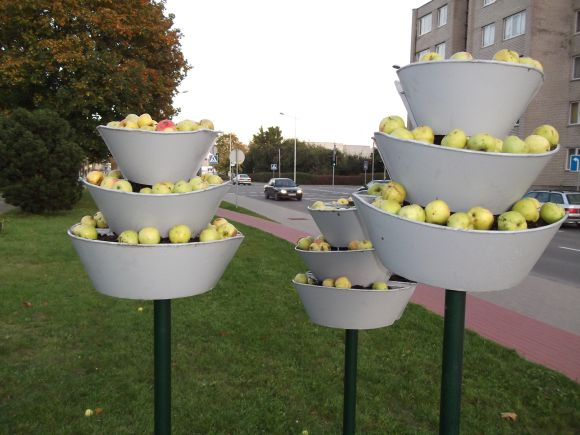Obuoliai Klaipėdos gatvėje ir stebina, ir džiugina praeivius.