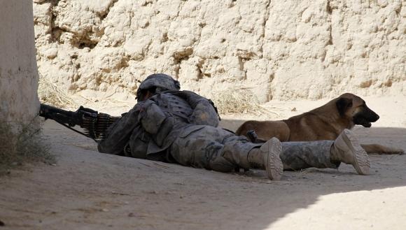 JAV karys su karo šunimi Afganistane per operaciją (2010 m.)