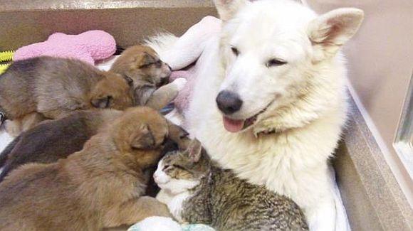 Esperanza ir visa jos šeimyna