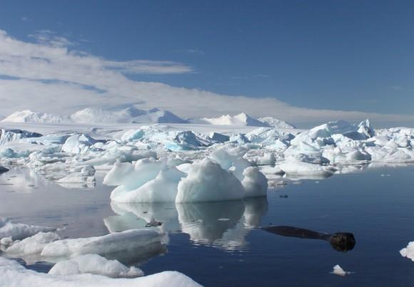 Ruonis Antarktidoje