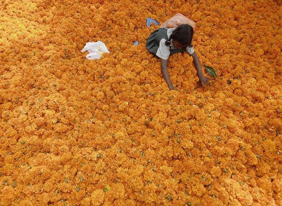 Scanpix nuotr./Indija