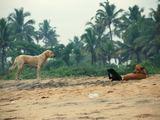 Linos Biekštaitės nuotr./Keralos valstijos šunys