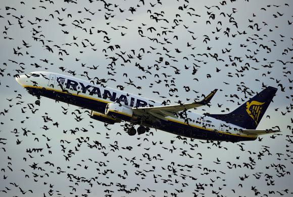 Paukščiai yra pavojingi lėktuvų varikliams