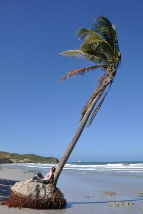 greitgrism.lt/Jūros paplauta palmė