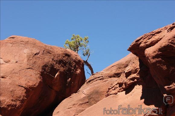 MM alpinistų nuotr./Lipimas uolomis Jutos dykumoje