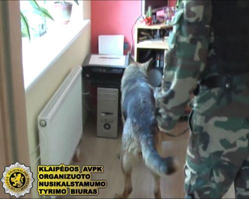 Klaipėdos policijai atskleisti nusikaltimus padeda ir keturkojai.