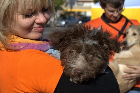 """2007 m. įsteigta gyvūnų globos organizacija """"Lesė"""" kasmet naujus namus randa keliems šimtams be globos likusių gyvūnų."""