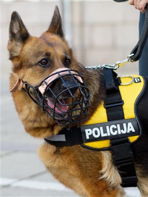 Nusikaltėlių pėdsakus susiekė šuo.