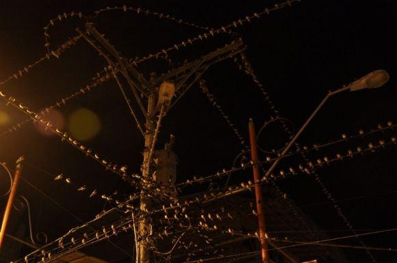 Greitgrisim.lt nuotr./Paukačiai ant elektros laidų