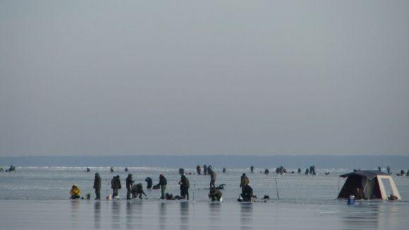 Žvejai traukia ant Kuršių marių ledo.