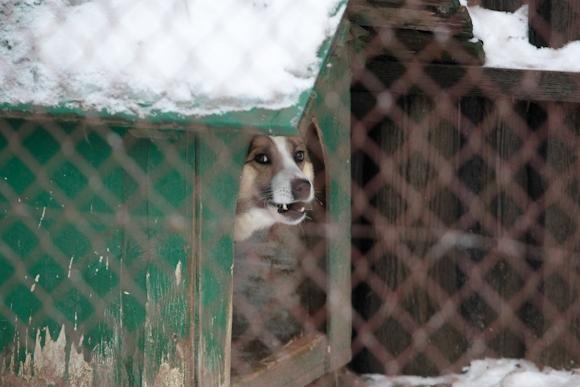 Šuo Kirtimų tabore