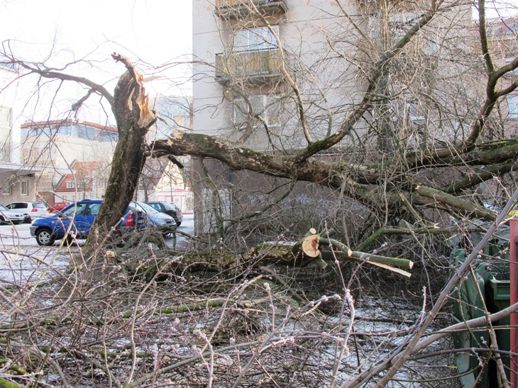 Herkaus Manto gatvėje stiprus vėjas išvertė medį.