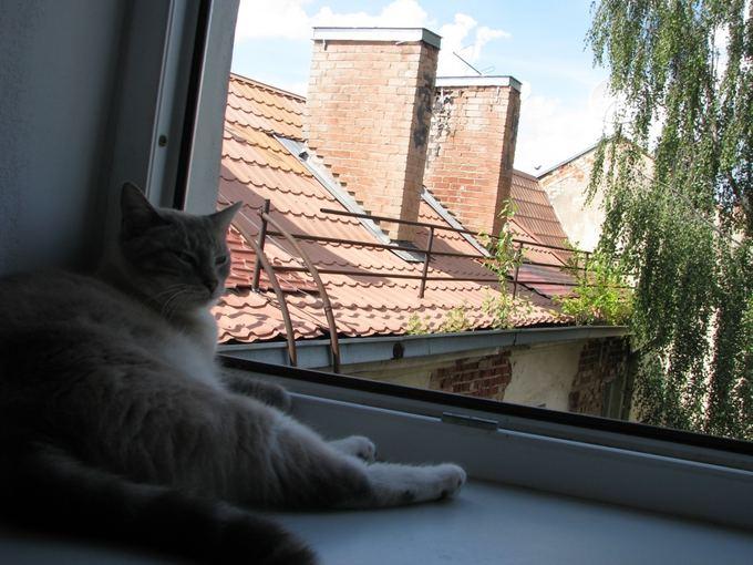 `arūno Bulotos/15min.lt nuotr./Katinas ant palangės