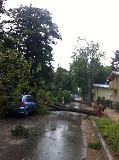 Asmeninio archyvo nuotr./Daiva Anužytė įamžino audros išvartytus medžius