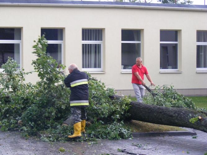 Nulūžusi liepa prie Ignalinos savivaldybės