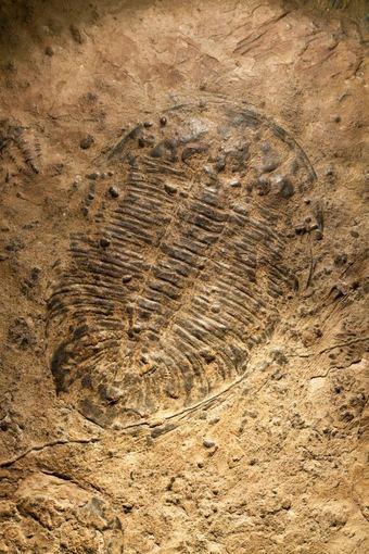 Shutterstock nuotr./Archeologinis Chengjiango draustinis
