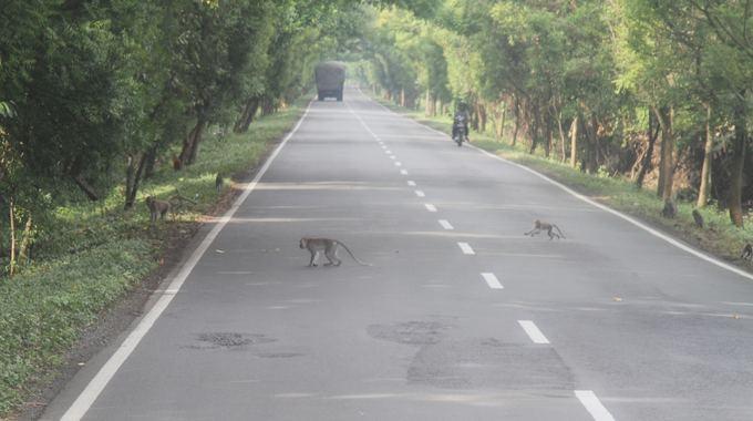 Evelinos ir Karolio nuotr./Beždžionių maldautojų ataka kelyje