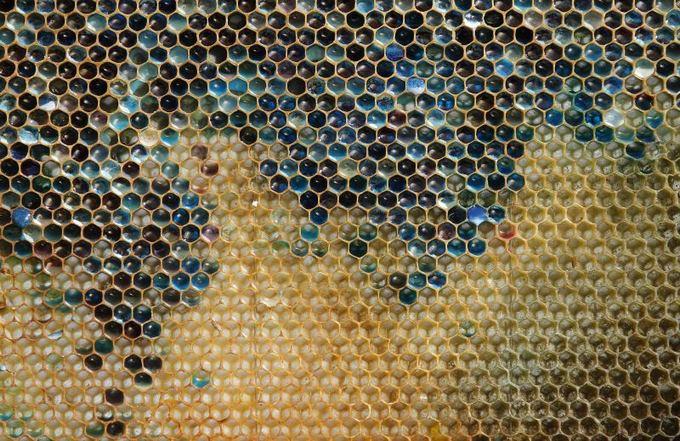 Scanpix nuotr./Prancūzijoje bitės neaa spalvotą medų