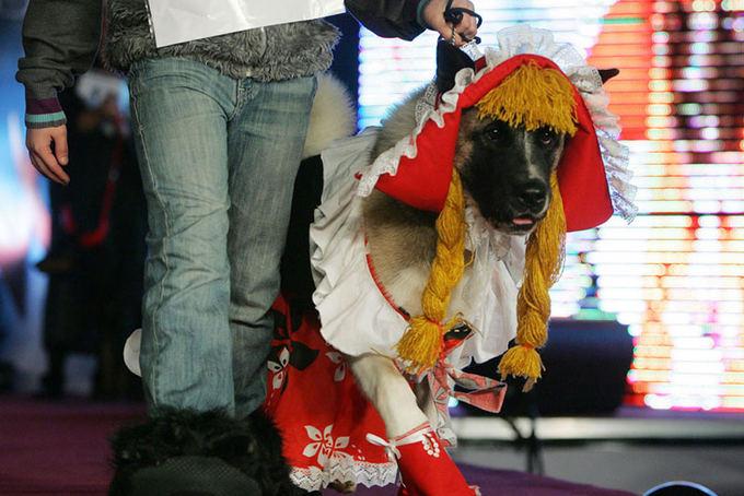 Teodoro Biliūno/Žmonės.lt nuotr./Konkurso Dog-o-weenas akimirka