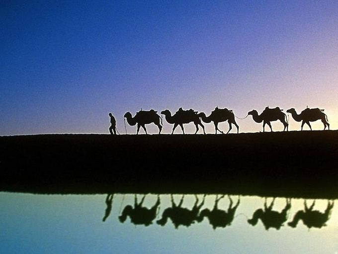 AFP/Scanpix nuotr./Pasaulio gyvūnnai: kupranugaris