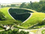Žalias stogas
