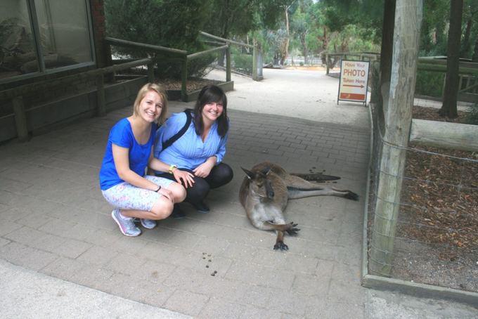 Asm. archyvo nuotr./`alia kengūros
