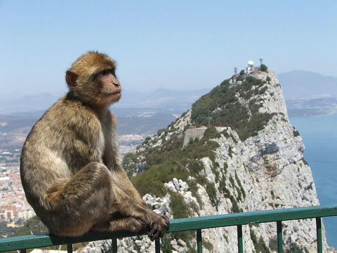 Beždžionės neatsiejamos nuo Gibraltaro