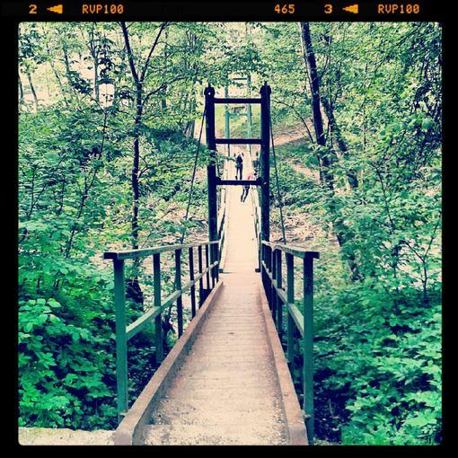 Liudo Basiulio nuotr./Bezdžionių tiltas