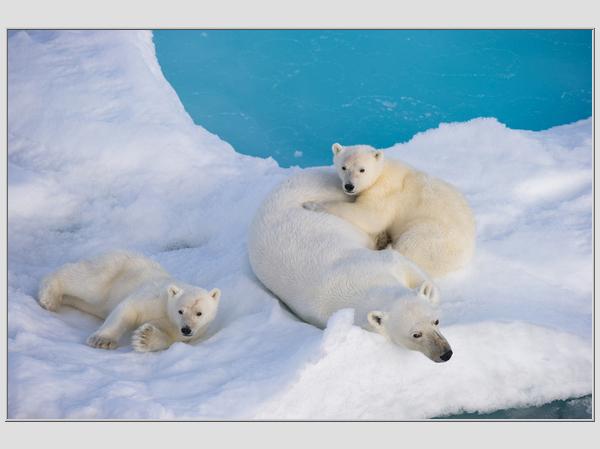Scanpix nuotr./Baltoji meaka  didžiausias pasaulio plėarūnas