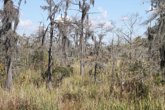 Evelinos ir Karolio nuotr. / Medžiai it ia kokios laumių pasakos. Augalai ant medžių prisitaikę gyventi taip, kad žemės nė nereikia