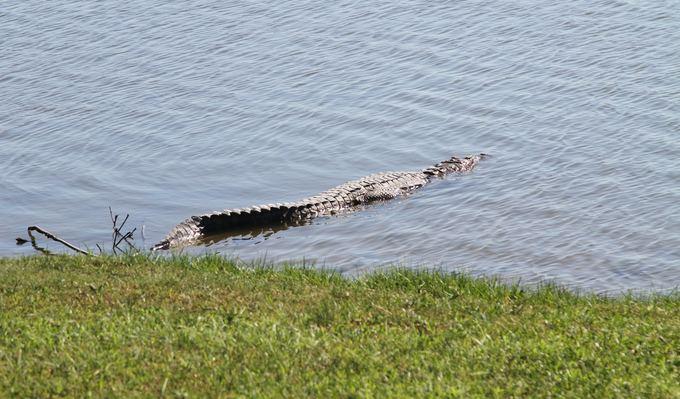 Evelinos ir Karolio nuotr./Krokodilai gyvena tiesiog miesto centr