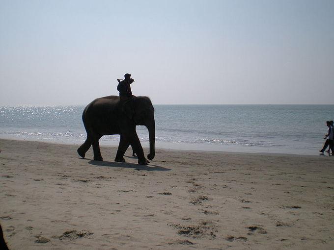 Wikimedia org. nuotr./Prarastasis pasaulio rojus Bangladeae