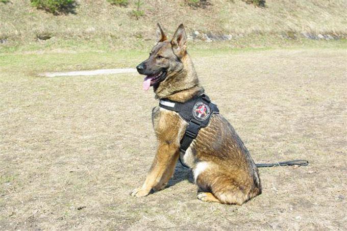 Tarnybinis pasieniečių šuo Aska
