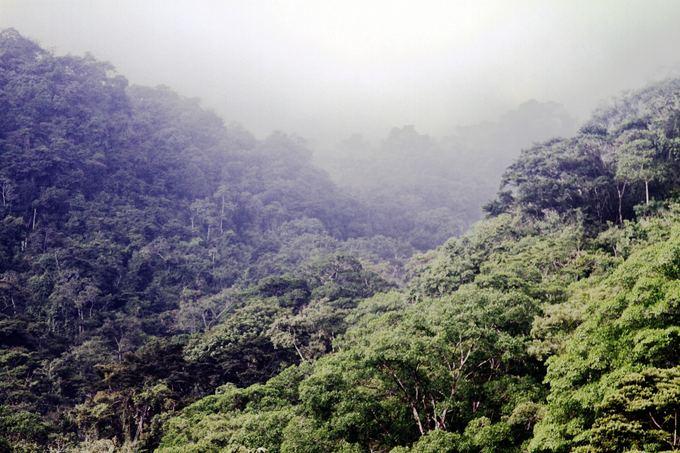 Evelinos ir Karolio nuotr./Gvatemalos džiunglės