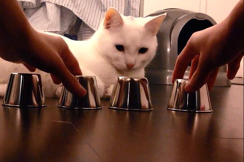 Aiškiaregis katinėlis Kido