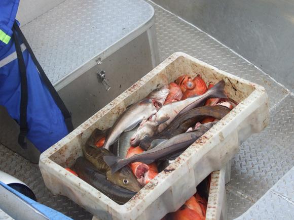 Patiekalai iš riebių jūrinių žuvų – geriausia širdies ir kraujagyslių susirgimų profilaktika