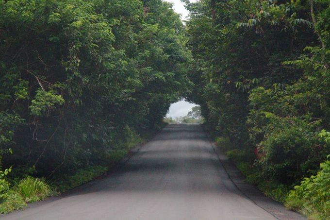 Evelinos ir Karolio nuotr. /Brazilijos džiunglės