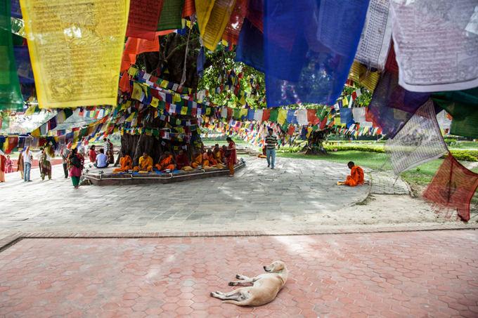 Be sienų nuotr./Budos gimtinė  Lumbini
