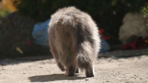 Ученые показали новый плащ-невидимку, скрыв рыбку и кошку