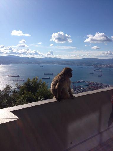 A.Lideikaitės nuotr./Beždžionėlė