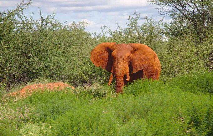 Evelinos ir Karolio nuotr./Mus prie kelio pasitikęs dramblys. Su tokiu nesinori susidurti, tad ir maainoje užtaisomas ginklas