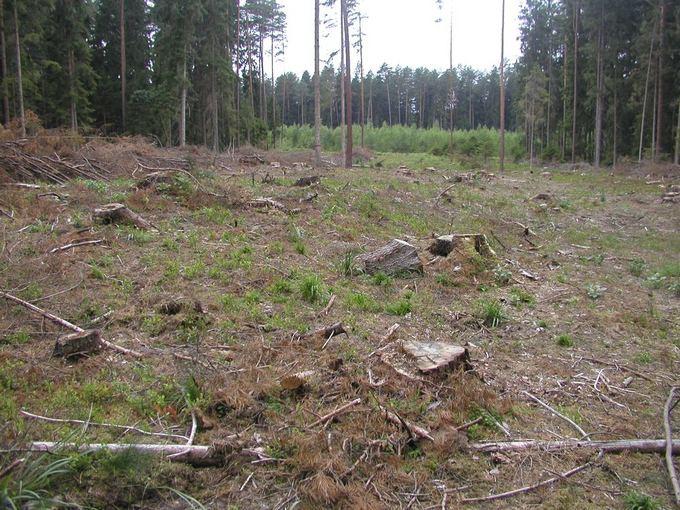 Vilmos Danauskienės nuotr./Veisiejų regioniniame parke esančiame Babrų miake  iakirsta hektaras miako, nors kirtimai toje vietoje - draudžiami.