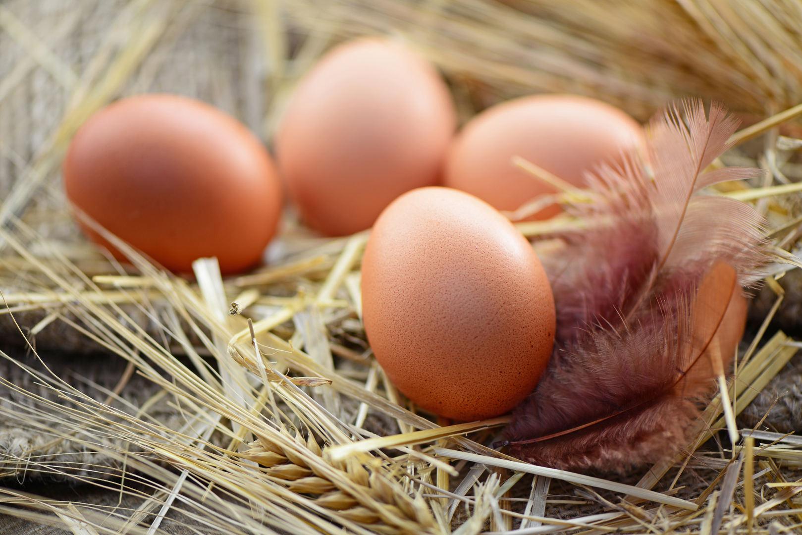 kaip padidinti erekcijos putpelių kiaušinius