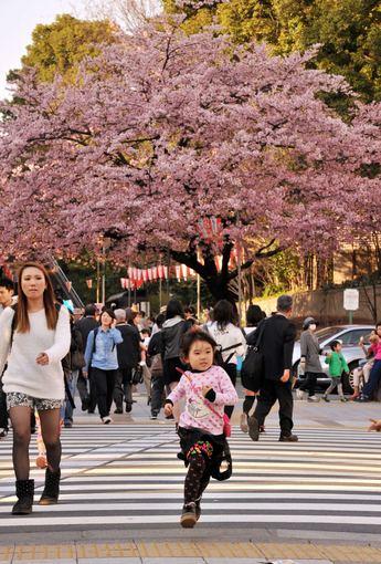 "AFP/""Scanpix"" nuotr./Tokijuje žydi japoniškos vyšnios"
