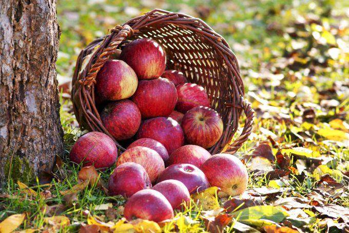 Obuolių pintinė