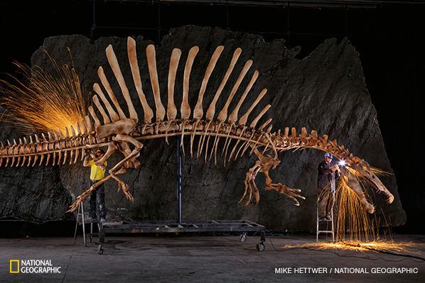 Darbininkai šlifuoja grublėtas realaus dydžio spinozauro griaučių briaunas. Šie gyvūno sandarą tiksliai atspindintys griaučiai sukurti pagal skaitmeninius duomenis. Mokslininkai sukūrė skaitmeninį modelį remdamiesi kompiuterinės tomografijos skaitytuvais gautomis fosilijų skenogramomis, neišlikusių