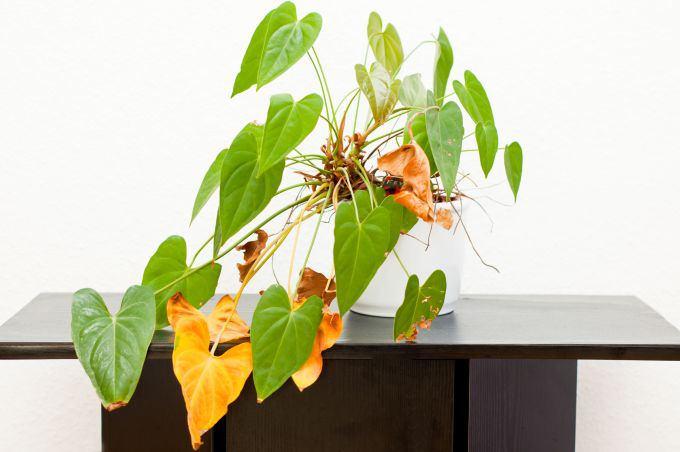 Kokias klaidas darote prižiūrėdami augalus?