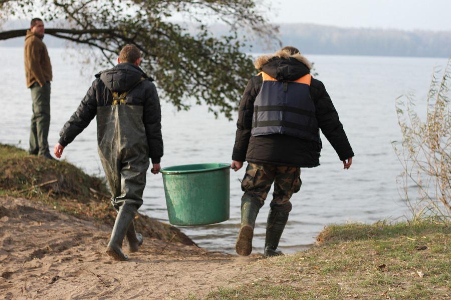Kauno mariose bus įveista daugiau nei 100 tūkst. lydekų, šamų ir sterkų