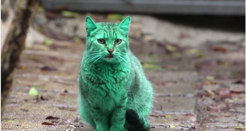Žalias katinas