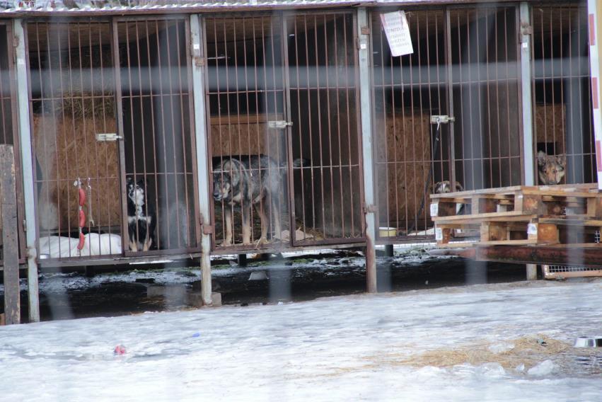 Gyvūnai Naujojoje Vilniuje